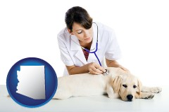 arizona a female veterinarian caring for a Labrador retriever