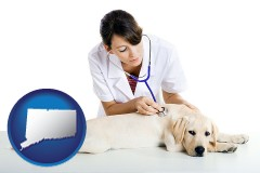 connecticut map icon and a female veterinarian caring for a Labrador retriever
