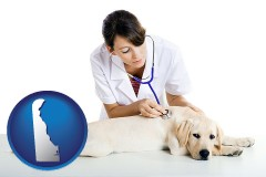 delaware map icon and a female veterinarian caring for a Labrador retriever