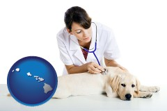 hawaii a female veterinarian caring for a Labrador retriever