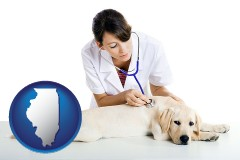 illinois map icon and a female veterinarian caring for a Labrador retriever