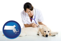 massachusetts map icon and a female veterinarian caring for a Labrador retriever