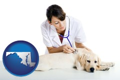 maryland map icon and a female veterinarian caring for a Labrador retriever