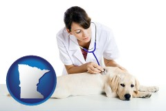 minnesota a female veterinarian caring for a Labrador retriever