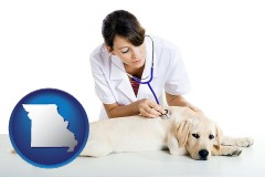 missouri map icon and a female veterinarian caring for a Labrador retriever