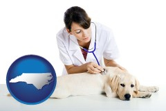 north-carolina a female veterinarian caring for a Labrador retriever