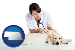 nebraska map icon and a female veterinarian caring for a Labrador retriever