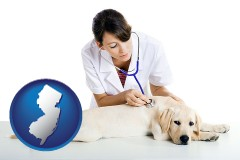 new-jersey map icon and a female veterinarian caring for a Labrador retriever