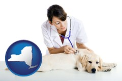 new-york map icon and a female veterinarian caring for a Labrador retriever