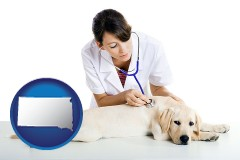 south-dakota a female veterinarian caring for a Labrador retriever