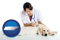 tennessee a female veterinarian caring for a Labrador retriever