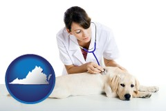 virginia map icon and a female veterinarian caring for a Labrador retriever