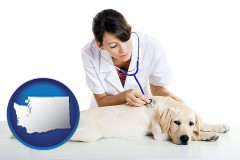 washington map icon and a female veterinarian caring for a Labrador retriever