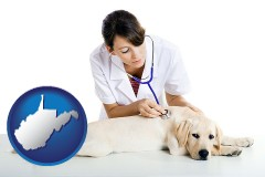 west-virginia map icon and a female veterinarian caring for a Labrador retriever