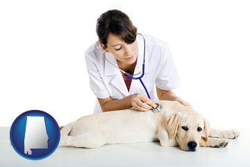 a female veterinarian caring for a Labrador retriever - with Alabama icon