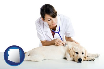 a female veterinarian caring for a Labrador retriever - with Arizona icon