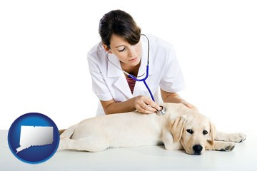 a female veterinarian caring for a Labrador retriever - with Connecticut icon