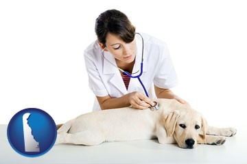 a female veterinarian caring for a Labrador retriever - with Delaware icon