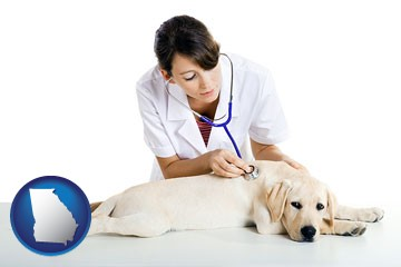 a female veterinarian caring for a Labrador retriever - with Georgia icon
