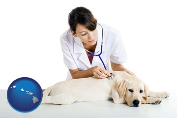 a female veterinarian caring for a Labrador retriever - with Hawaii icon