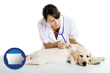 a female veterinarian caring for a Labrador retriever - with Iowa icon