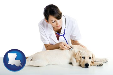 a female veterinarian caring for a Labrador retriever - with Louisiana icon