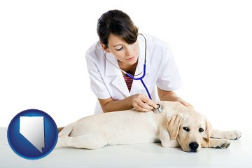 a female veterinarian caring for a Labrador retriever - with Nevada icon