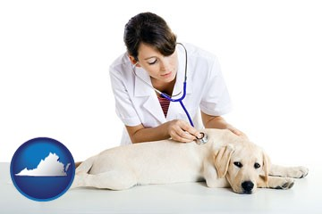 a female veterinarian caring for a Labrador retriever - with Virginia icon