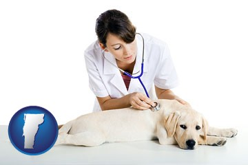 a female veterinarian caring for a Labrador retriever - with Vermont icon