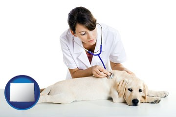 a female veterinarian caring for a Labrador retriever - with Wyoming icon