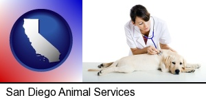 San Diego, California - a female veterinarian caring for a Labrador retriever